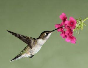 Shutterstock free image